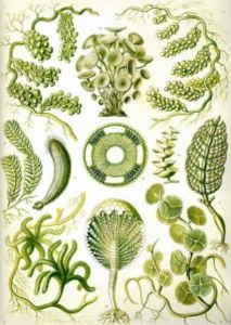 algen im teich nachhaltig bek mpfen und entfernen. Black Bedroom Furniture Sets. Home Design Ideas