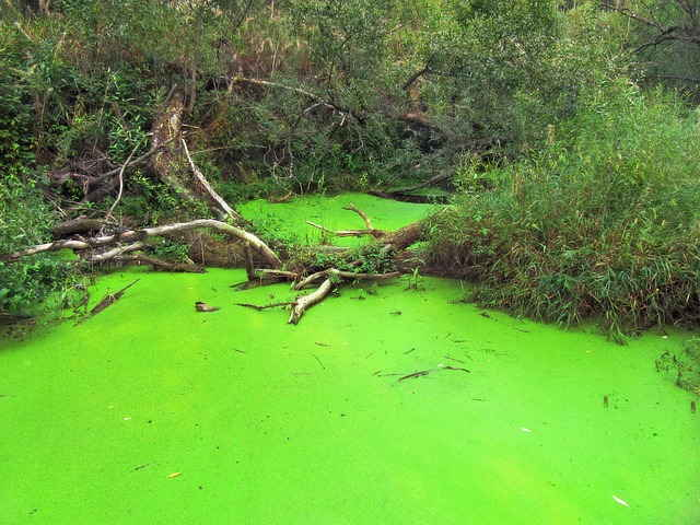 Algen im teich nachhaltig bek mpfen und entfernen for Algen im teich entfernen ohne chemie