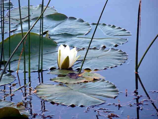 Algen im teich nachhaltig bek mpfen und entfernen for Wasserpflanzen gegen algen teich